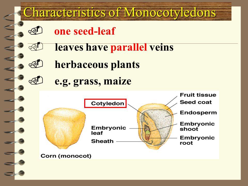 Characteristics of Monocotyledons