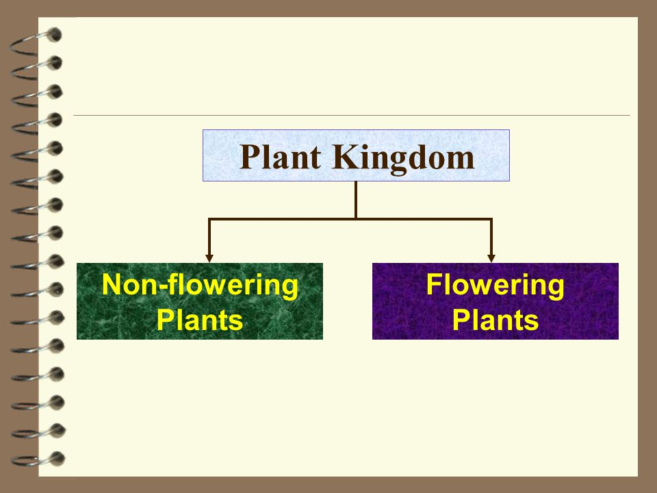 Plant Kingdom Non-flowering Plants Flowering Plants