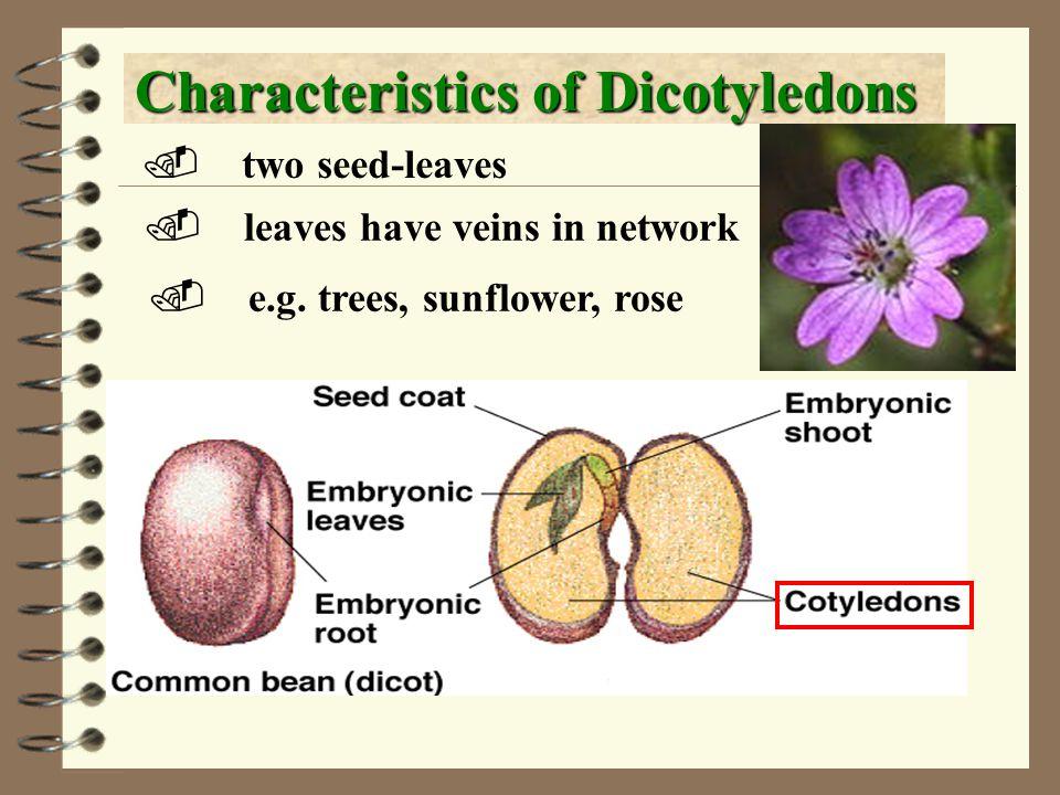 Characteristics of Dicotyledons