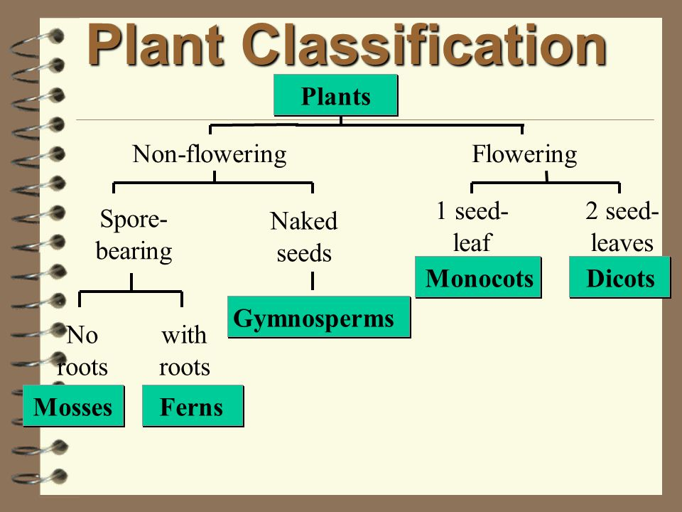 Plant Classification Plants Non-flowering Flowering 1 seed-leaf