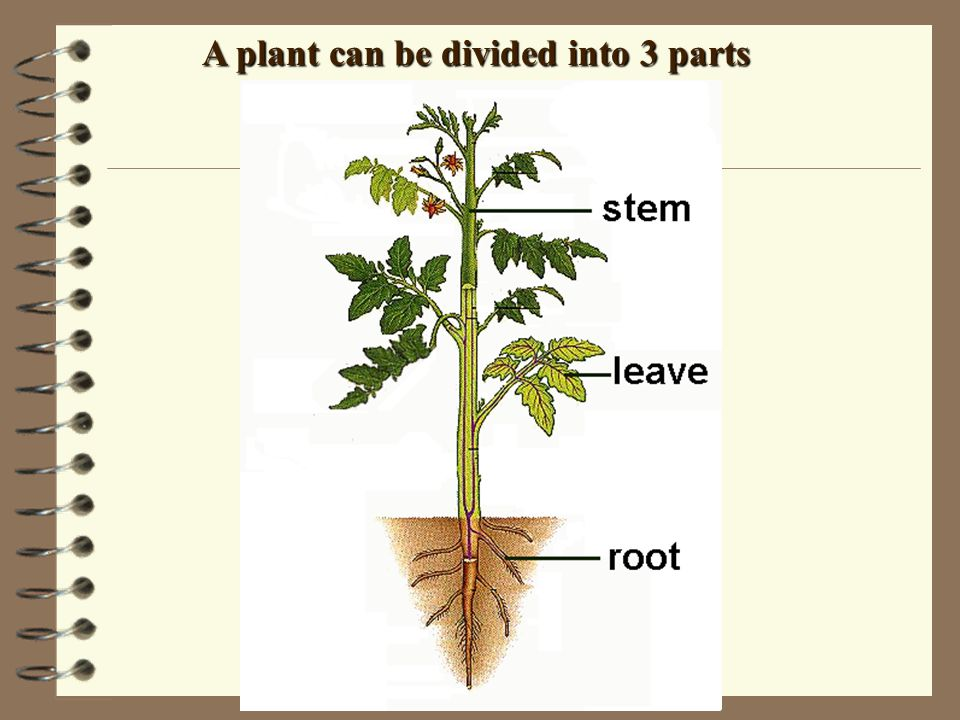 A plant can be divided into 3 parts