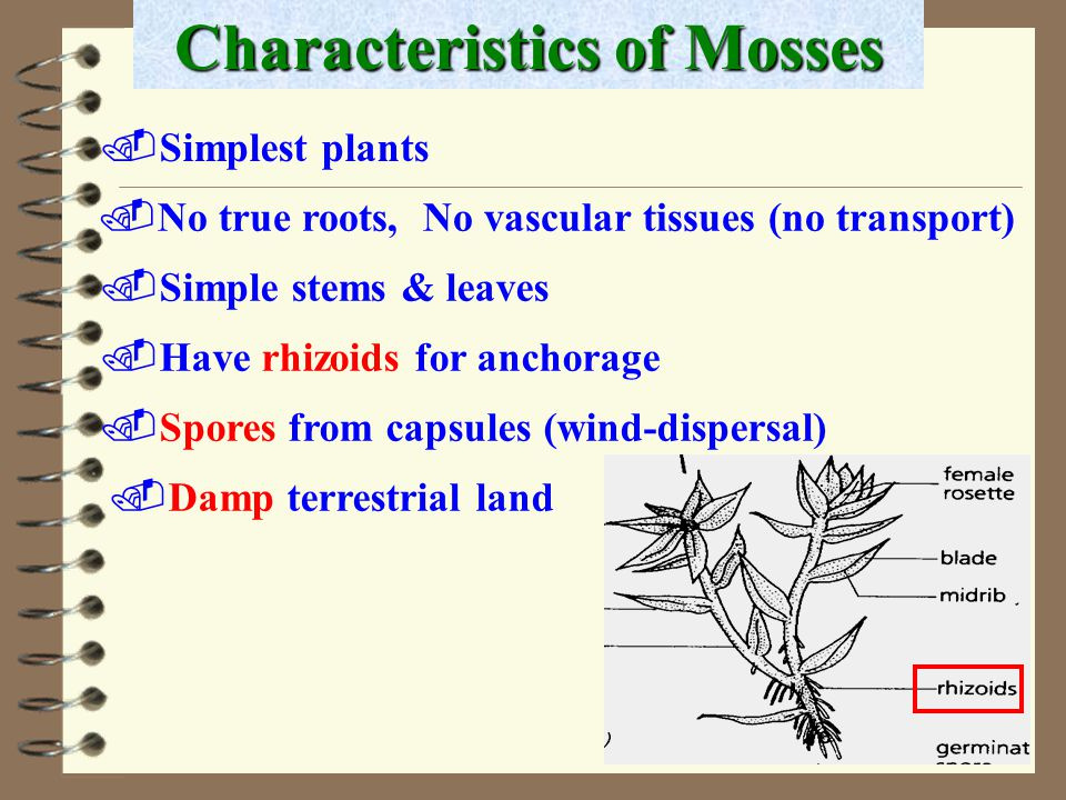 Characteristics of Mosses