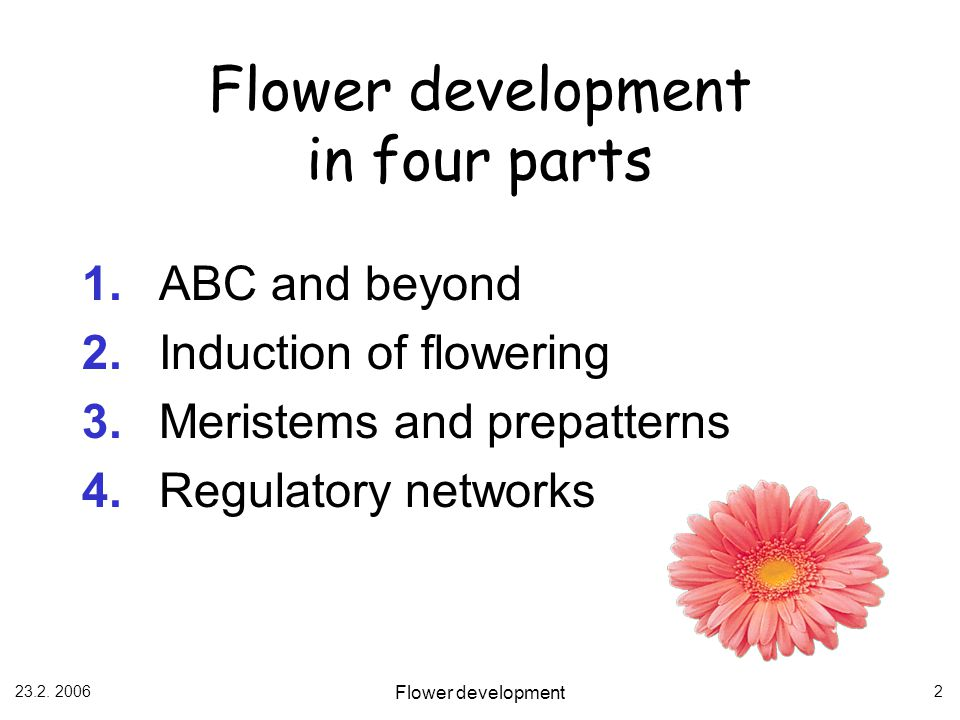 Flower development in four parts