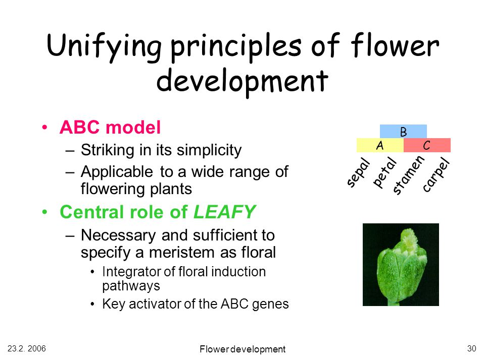 Unifying principles of flower development