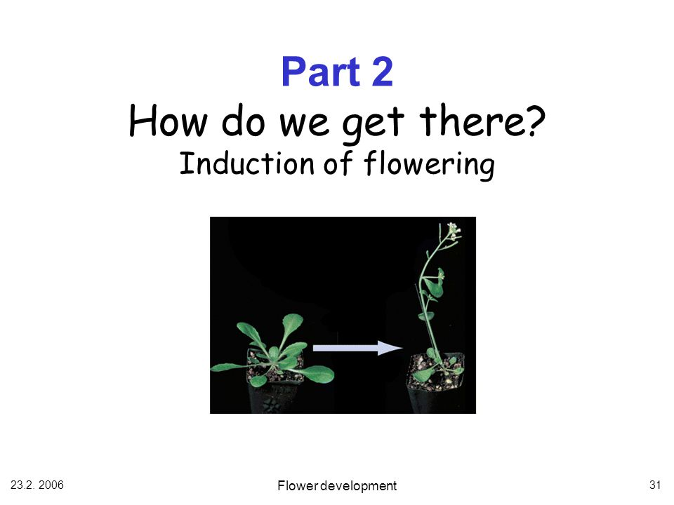 Part 2 How do we get there Induction of flowering