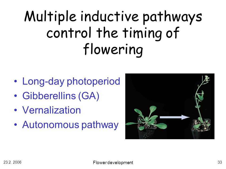 Multiple inductive pathways control the timing of flowering