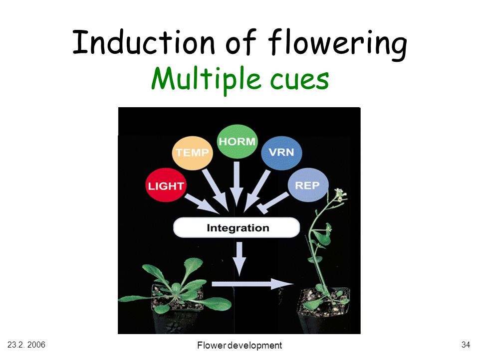 Induction of flowering