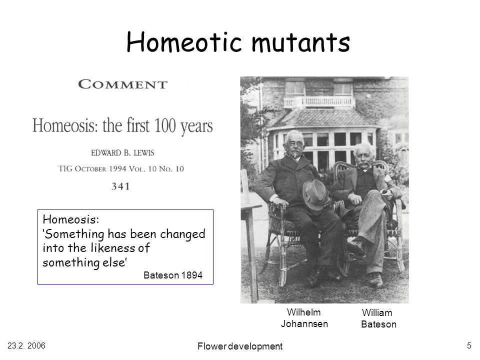 Homeotic mutants Homeosis: