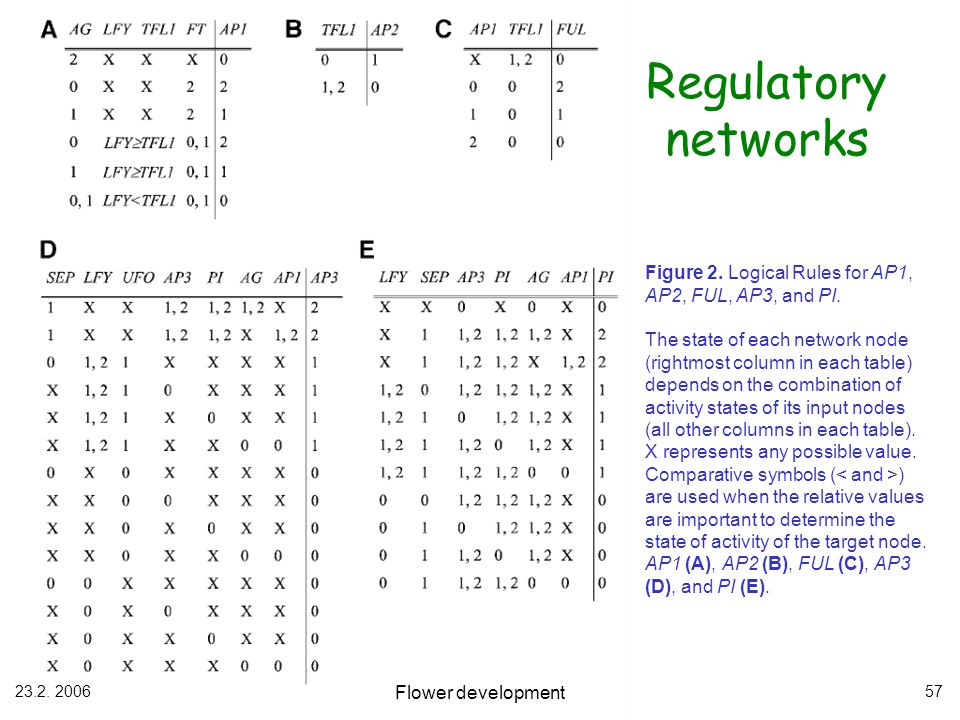 Regulatory networks Figure 2. Logical Rules for AP1, AP2, FUL, AP3, and PI.