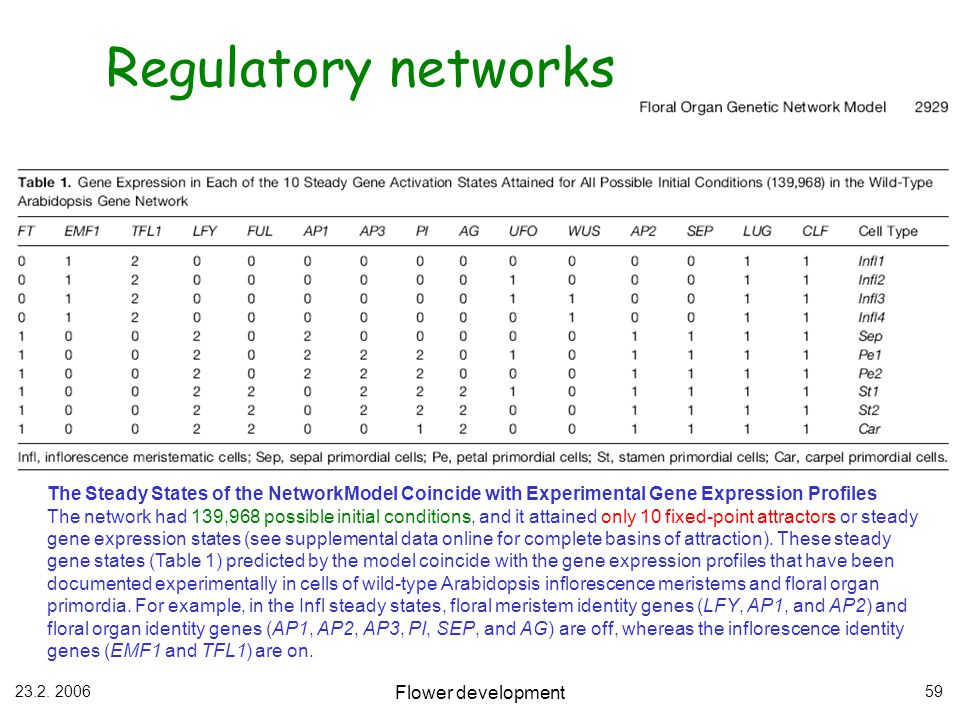 Regulatory networks The Steady States of the NetworkModel Coincide with Experimental Gene Expression Profiles.