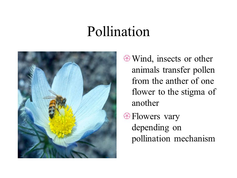 Pollination Wind, insects or other animals transfer pollen from the anther of one flower to the stigma of another.