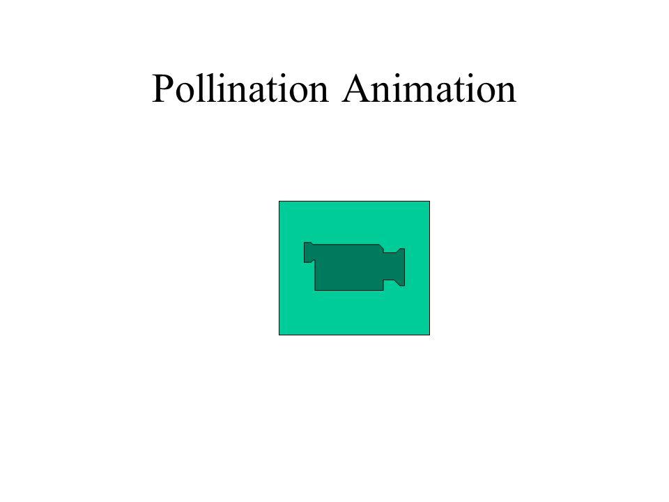 Pollination Animation