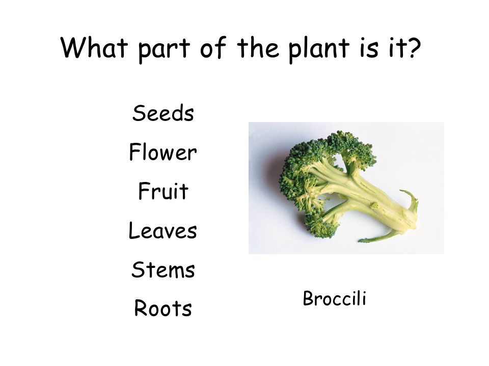 What part of the plant is it