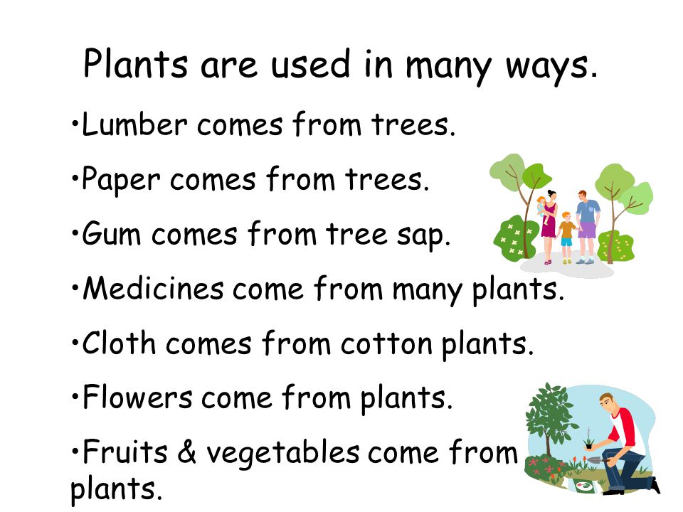 Plants are used in many ways.