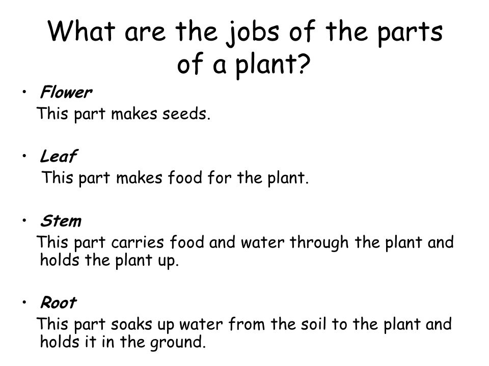 What are the jobs of the parts of a plant