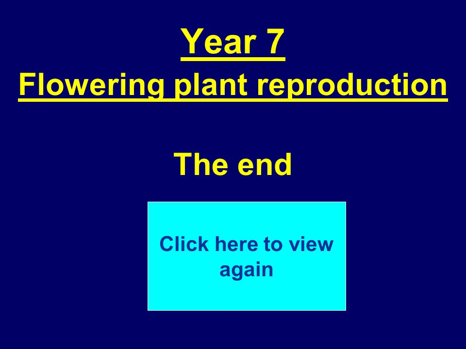 Year 7 Flowering plant reproduction The end