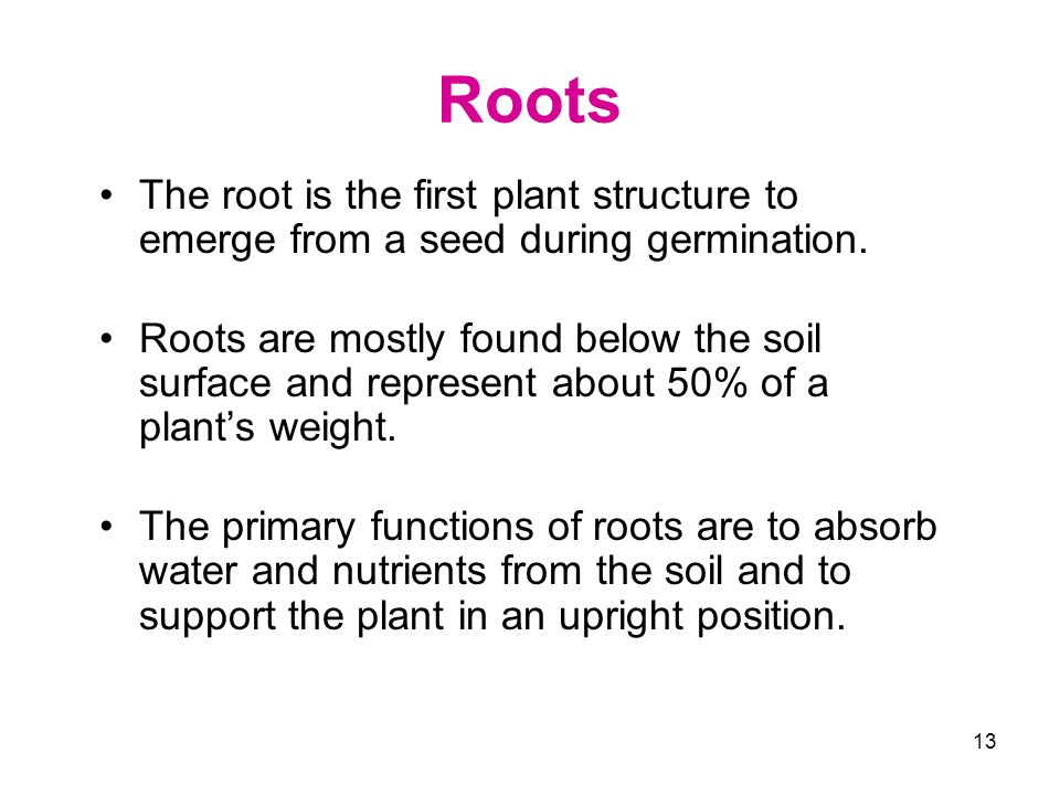 Roots The root is the first plant structure to emerge from a seed during germination.
