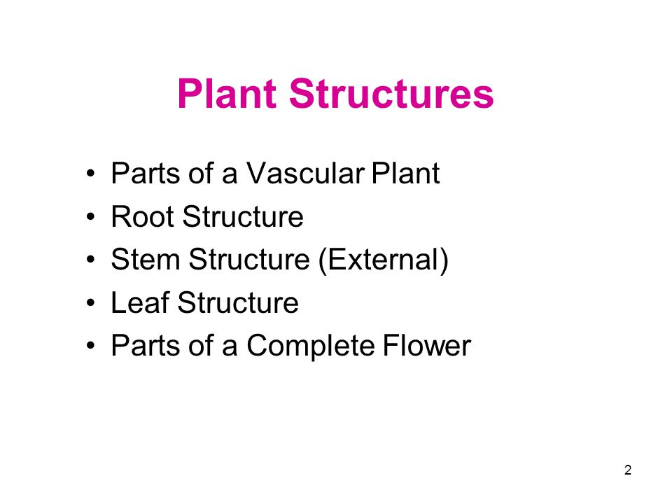 Plant Structures Parts of a Vascular Plant Root Structure