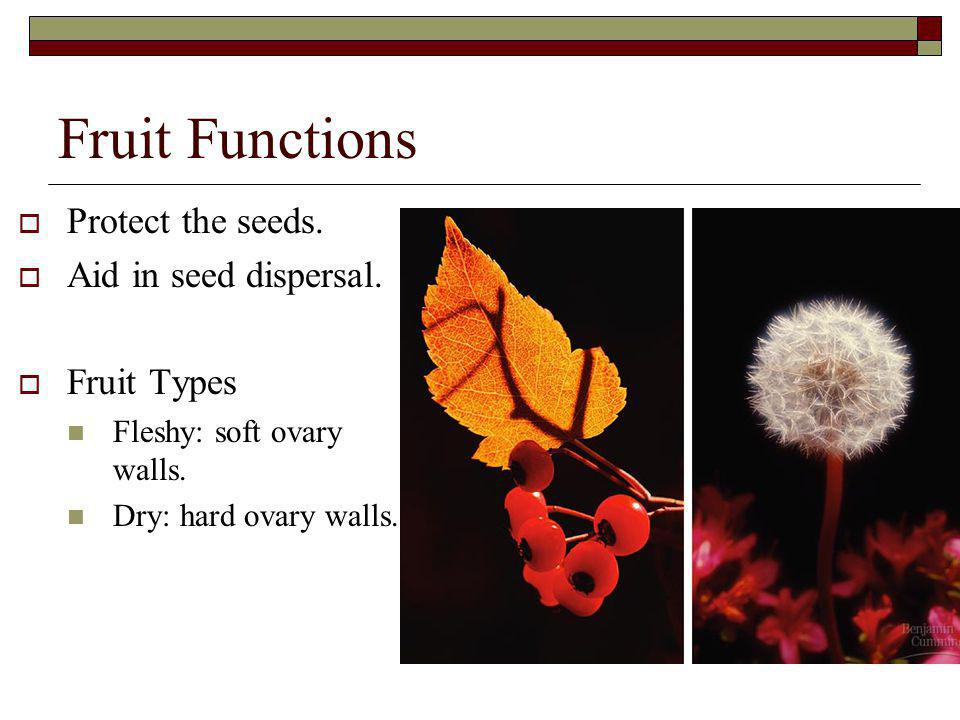 Fruit Functions Protect the seeds. Aid in seed dispersal. Fruit Types