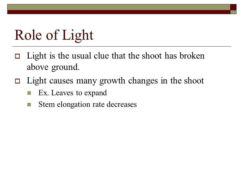Role of Light Light is the usual clue that the shoot has broken above ground. Light causes many growth changes in the shoot.