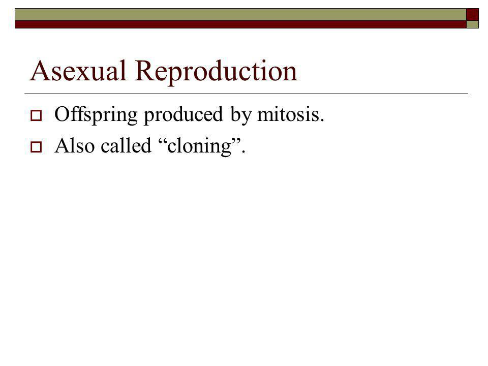 Asexual Reproduction Offspring produced by mitosis.
