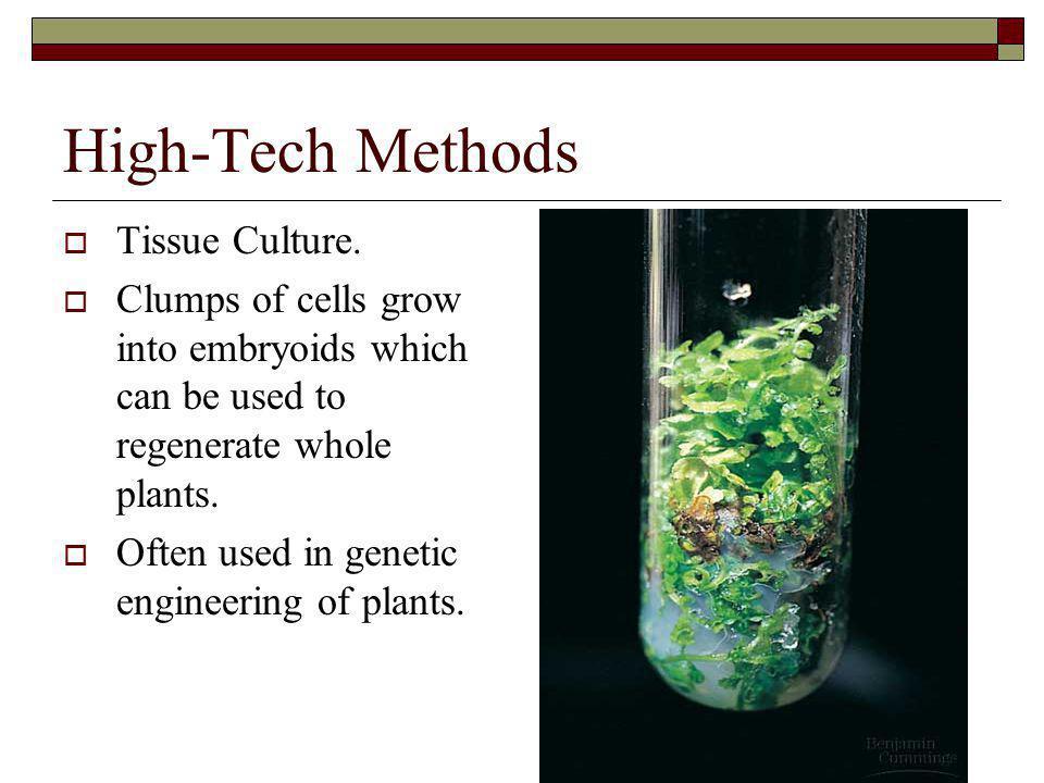 High-Tech Methods Tissue Culture.