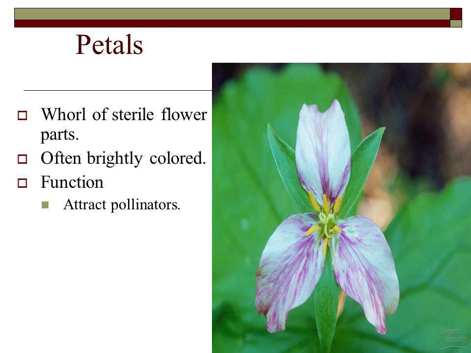 Petals Whorl of sterile flower parts. Often brightly colored. Function