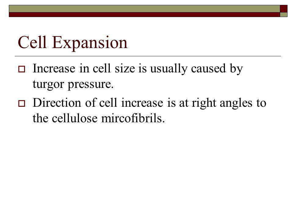Cell Expansion Increase in cell size is usually caused by turgor pressure.