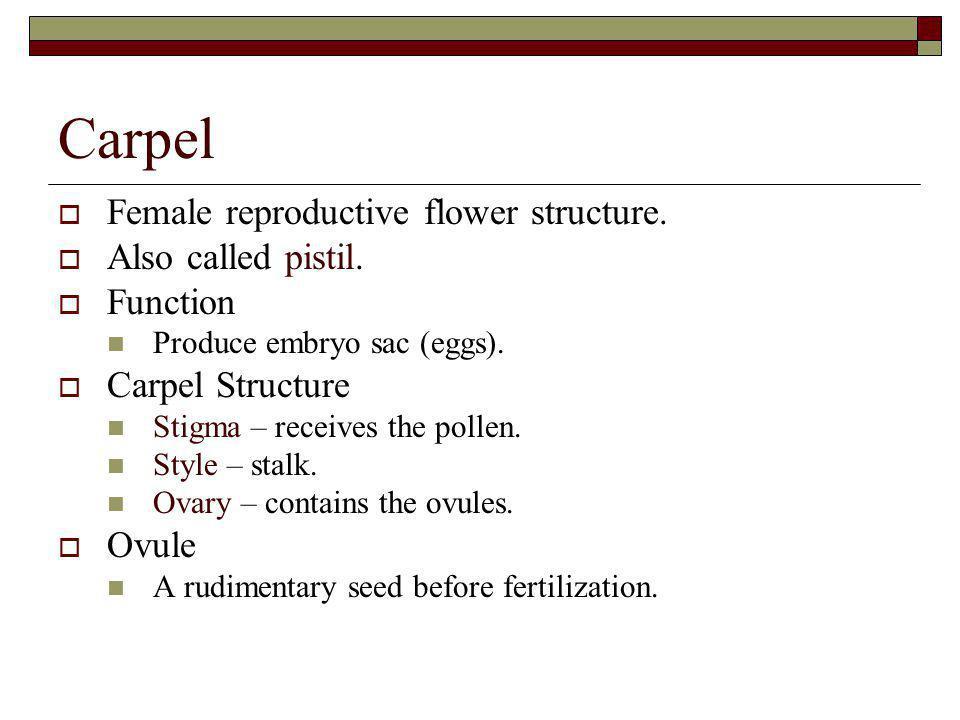 Carpel Female reproductive flower structure. Also called pistil.