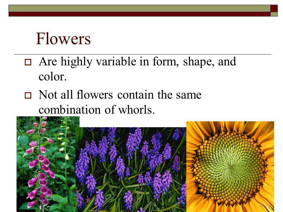 Flowers Are highly variable in form, shape, and color.