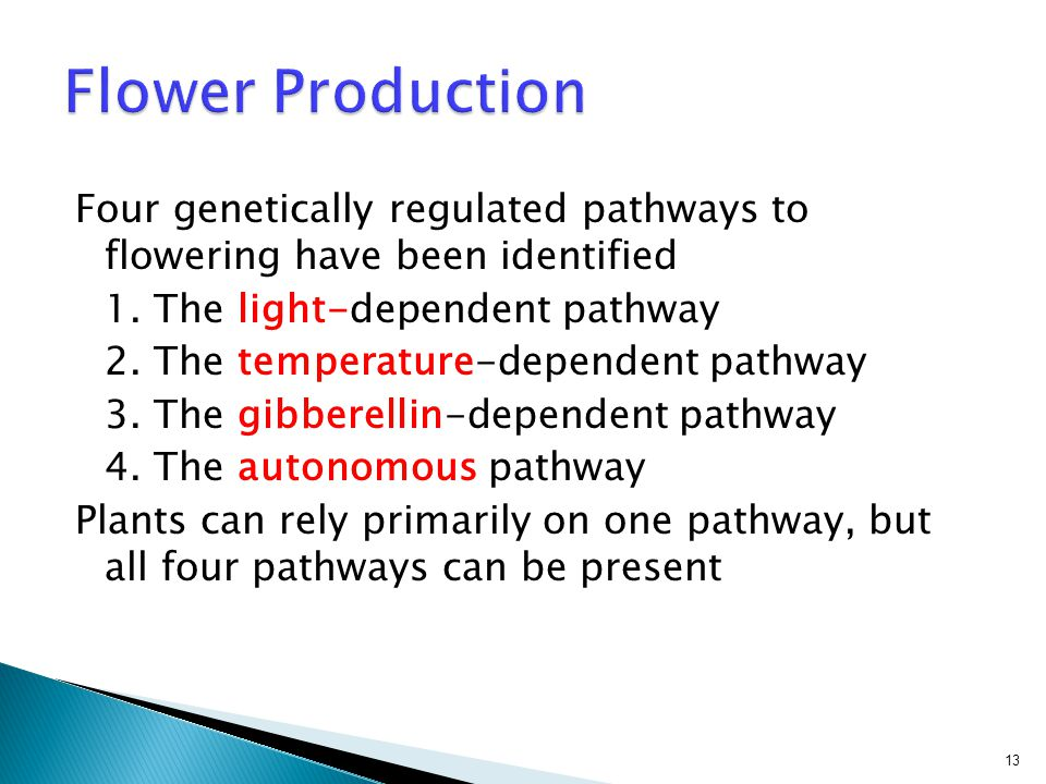 Flower Production Four genetically regulated pathways to flowering have been identified. 1. The light-dependent pathway.