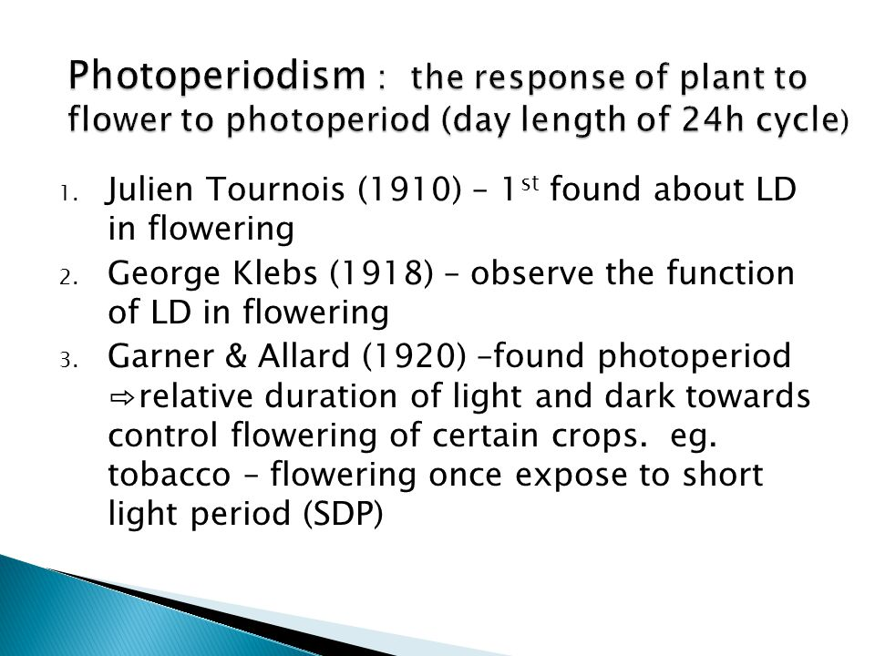 Photoperiodism : the response of plant to flower to photoperiod (day length of 24h cycle)