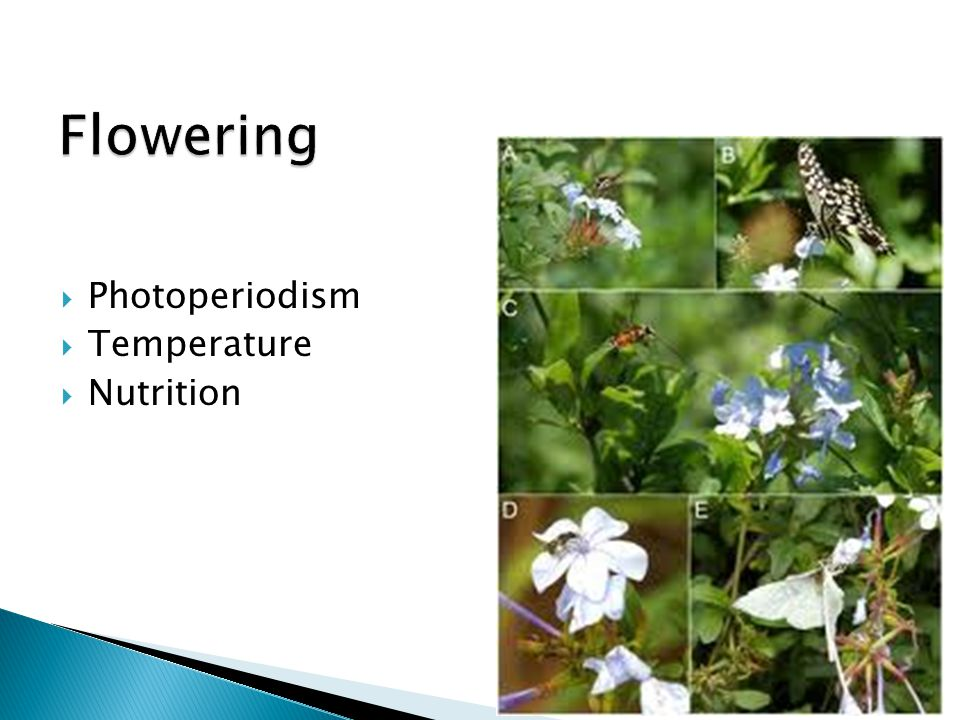 Flowering Photoperiodism Temperature Nutrition