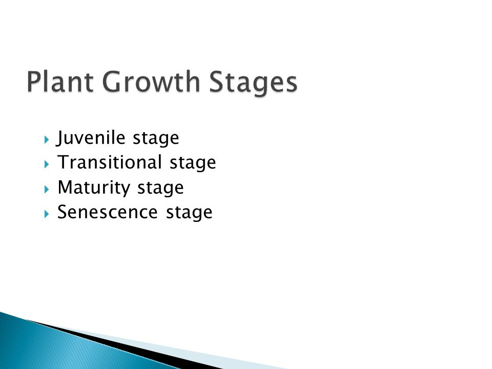 Plant Growth Stages Juvenile stage Transitional stage Maturity stage
