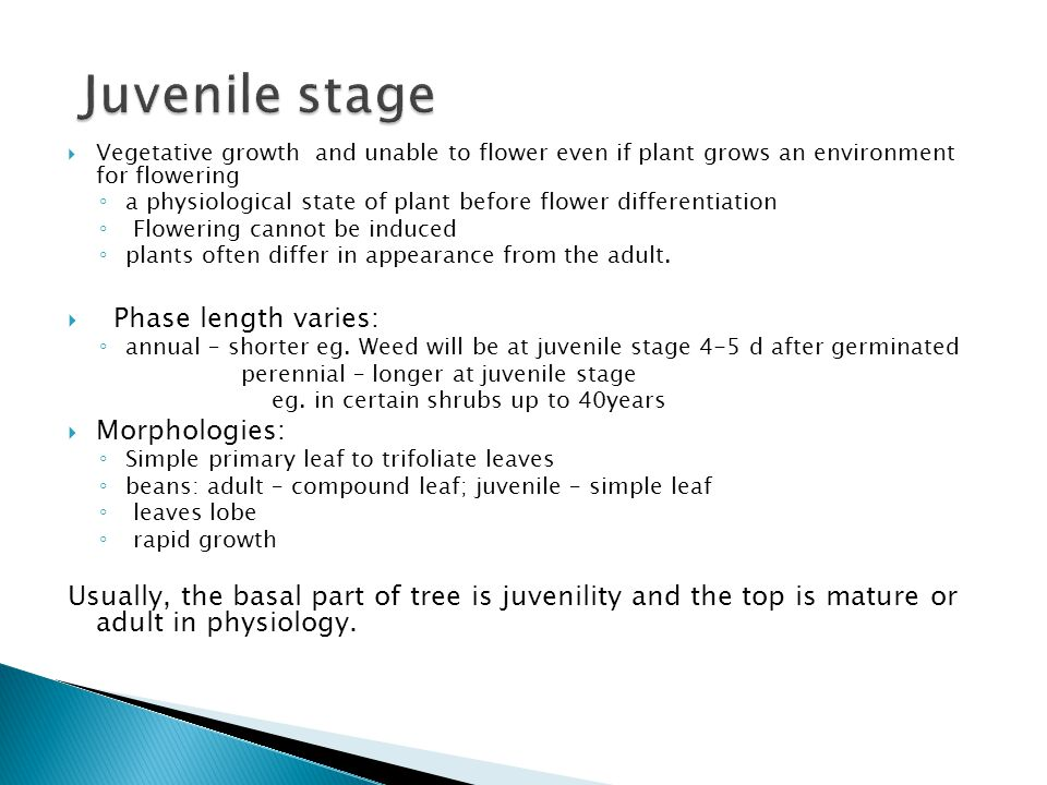 Juvenile stage Phase length varies: Morphologies: