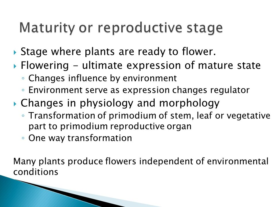 Maturity or reproductive stage