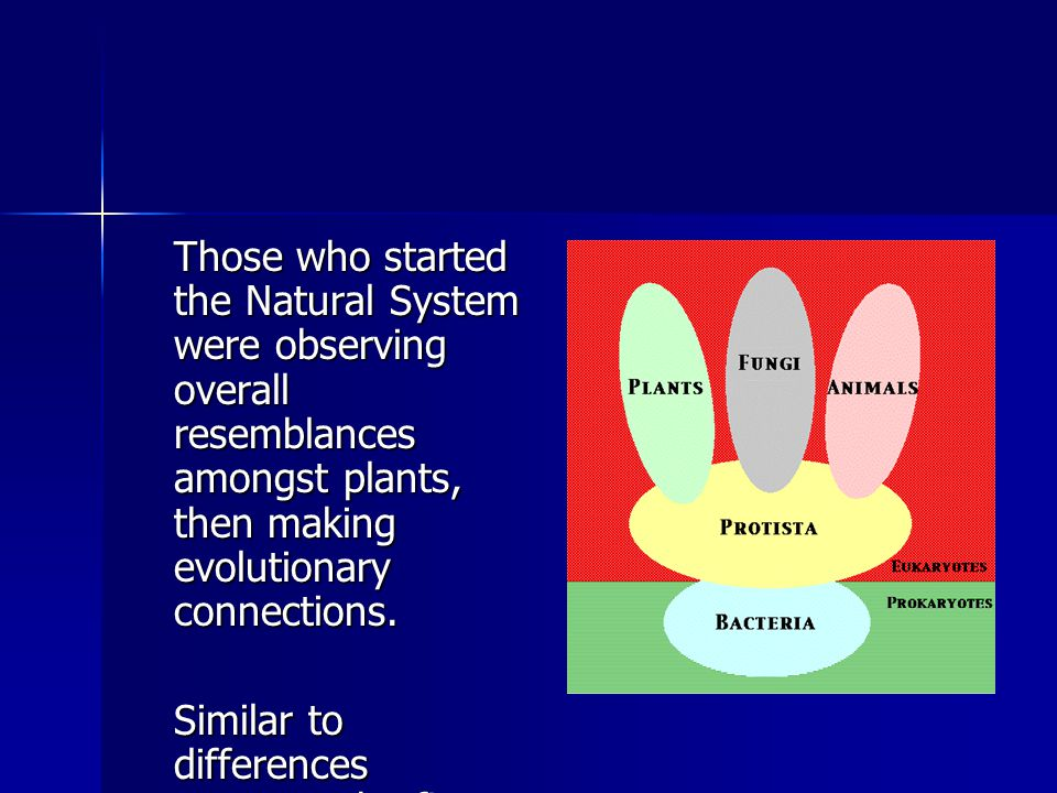 Those who started the Natural System were observing overall resemblances amongst plants, then making evolutionary connections.