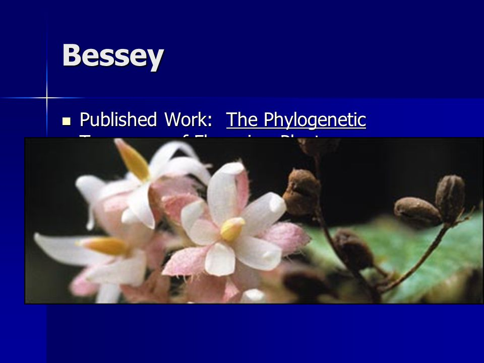 Bessey Published Work: The Phylogenetic Taxonomy of Flowering Plants