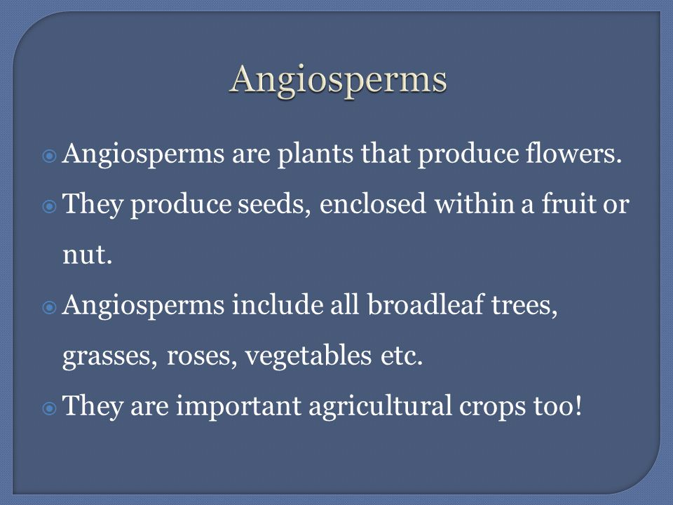 Angiosperms Angiosperms are plants that produce flowers.