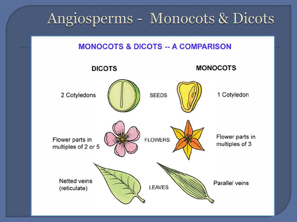 Angiosperms - Monocots & Dicots