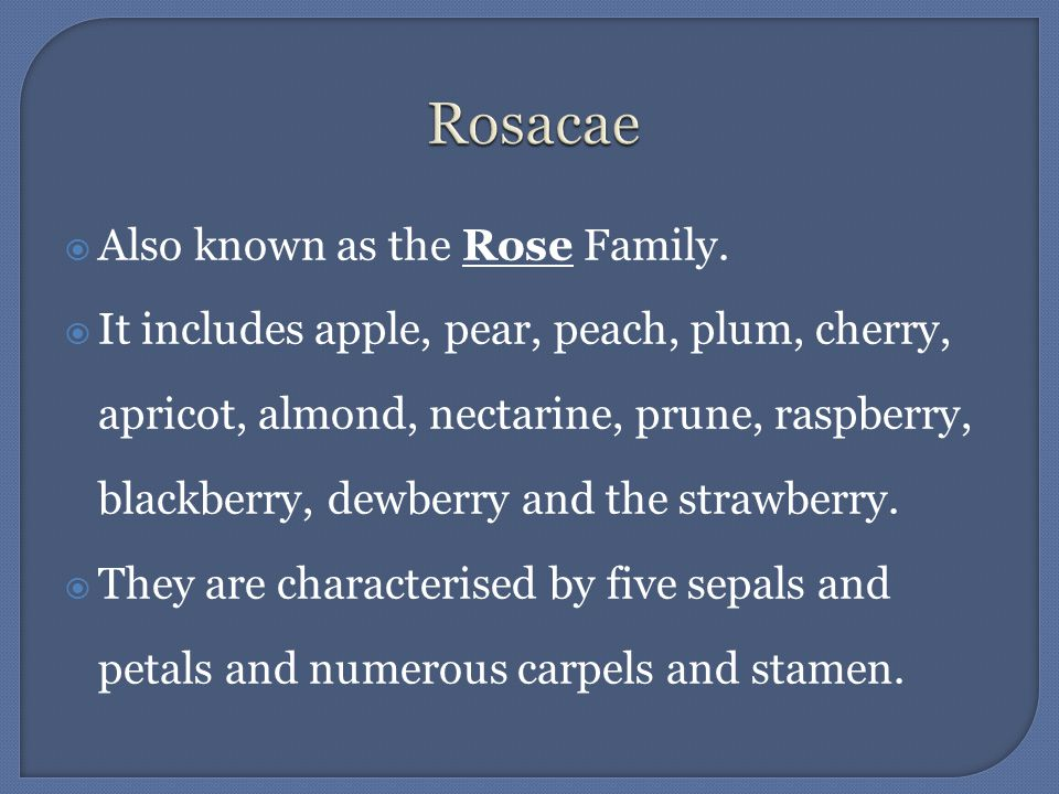 Rosacae Also known as the Rose Family.