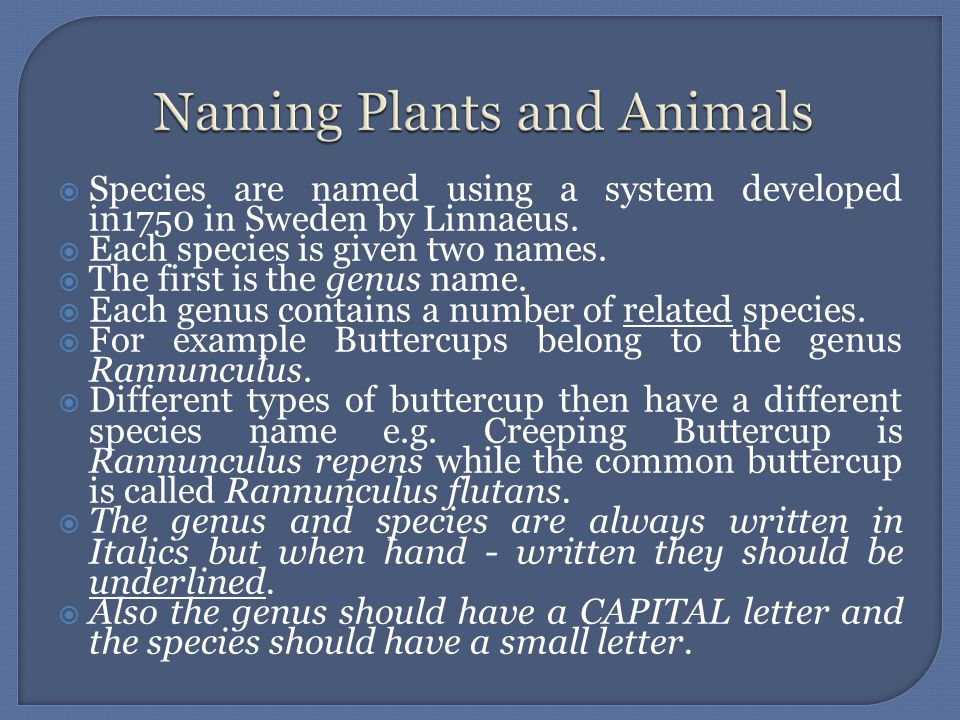 Naming Plants and Animals