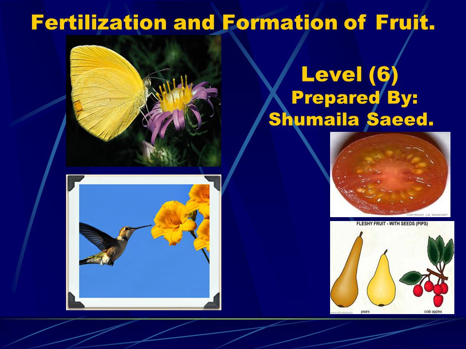 Fertilization and Formation of Fruit
