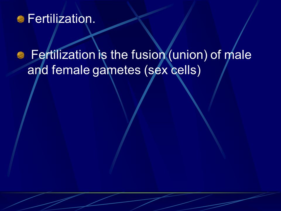 Fertilization. Fertilization is the fusion (union) of male and female gametes (sex cells)