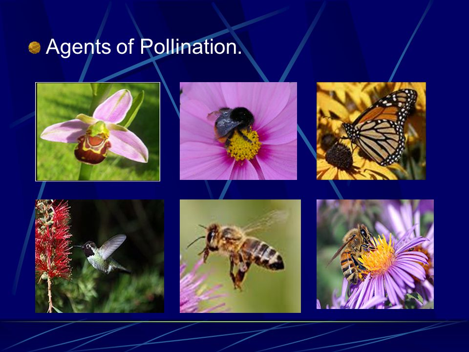 Agents of Pollination.
