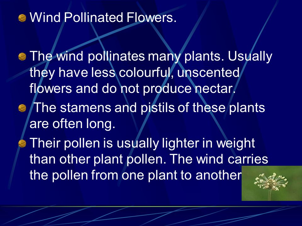 Wind Pollinated Flowers.