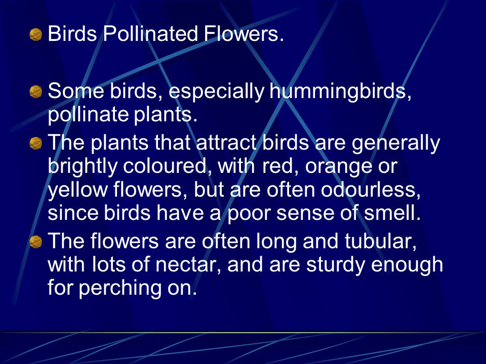 Birds Pollinated Flowers.