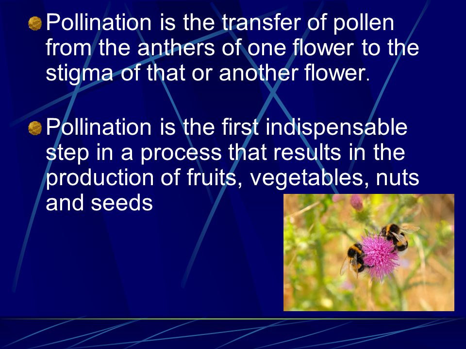 Pollination is the transfer of pollen from the anthers of one flower to the stigma of that or another flower.