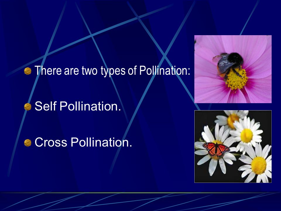 There are two types of Pollination: