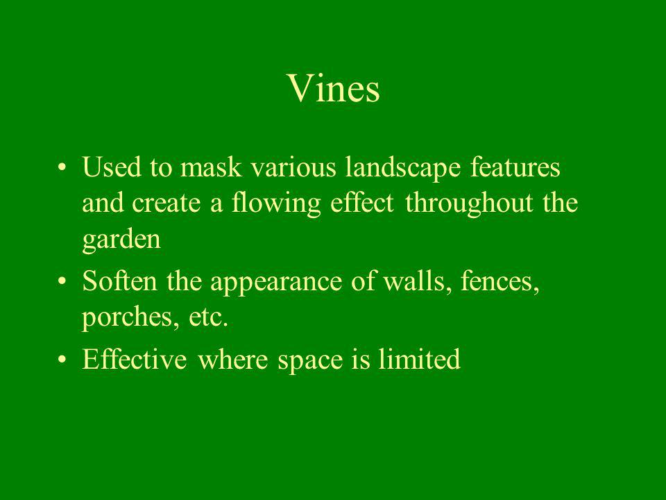 Vines Used to mask various landscape features and create a flowing effect throughout the garden.